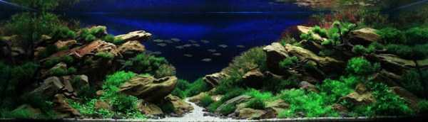best-aquarium-underwater-decoration-ideas (9)