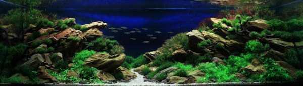 best-aquarium-underwater-decoration-ideas (9)