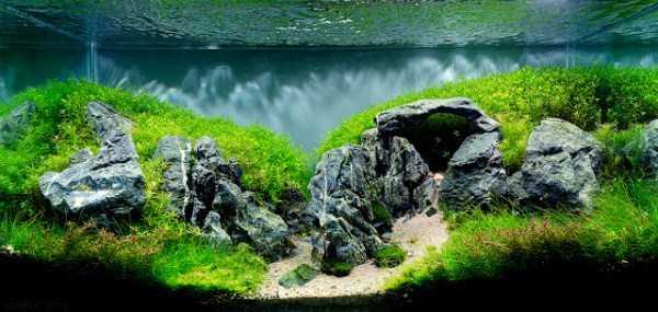 best-aquarium-underwater-decoration-ideas (90)