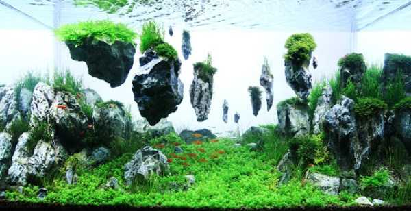 best-aquarium-underwater-decoration-ideas (91)