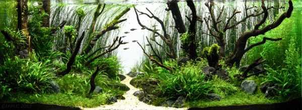 best-aquarium-underwater-decoration-ideas (92)