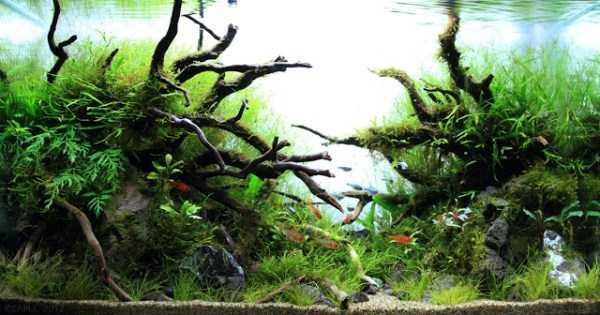 best-aquarium-underwater-decoration-ideas (93)