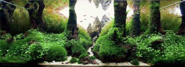 best-aquarium-underwater-decoration-ideas (94)