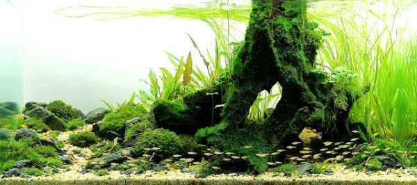 best-aquarium-underwater-decoration-ideas (95)