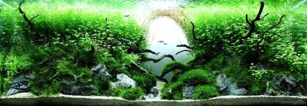 best-aquarium-underwater-decoration-ideas (97)