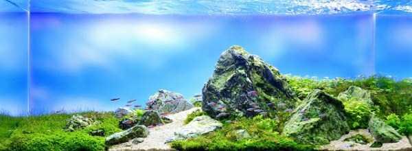best-aquarium-underwater-decoration-ideas (99)