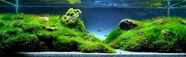cool-aquarium-decorations (10)