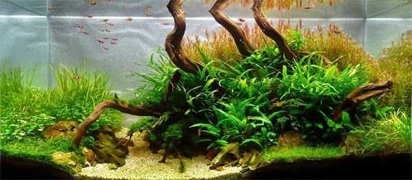 cool-aquarium-decorations (11)