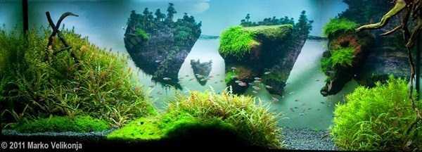 cool-aquarium-decorations (13)