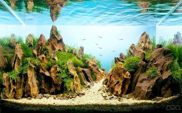 Aquariums With Amazing Underwater Decorations (123 photos) 6