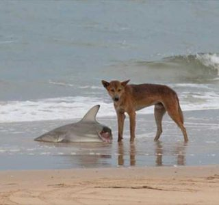 Totally Crazy Things Seen in Australia (30 photos)