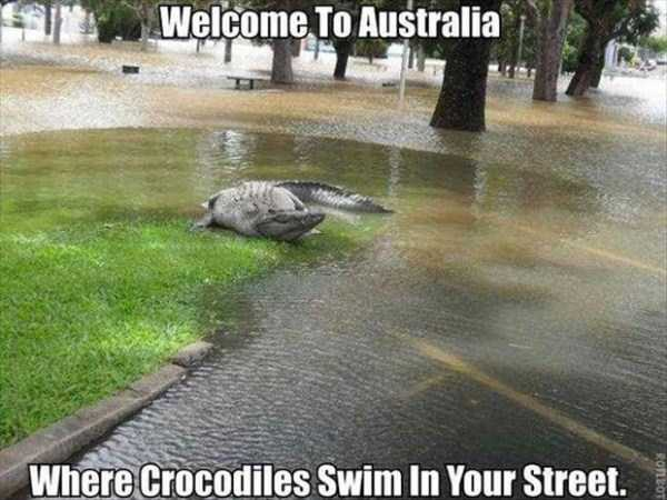 crazy-things-in-australia (14)