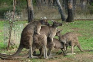 Totally Crazy Things Seen in Australia (30 photos) 27