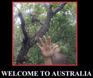 Totally Crazy Things Seen in Australia (30 photos) 28