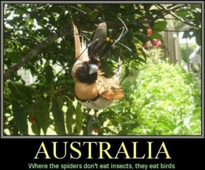 Totally Crazy Things Seen in Australia (30 photos) 3