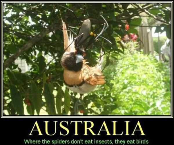 crazy-things-in-australia (3)