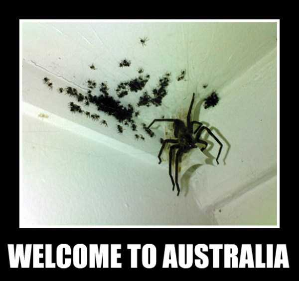 crazy-things-in-australia (30)