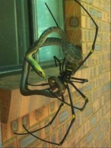 Totally Crazy Things Seen in Australia (30 photos) 5