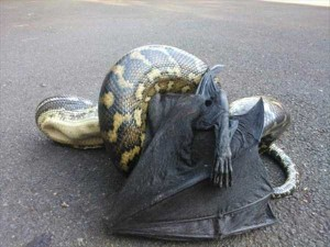 Totally Crazy Things Seen in Australia (30 photos) 6