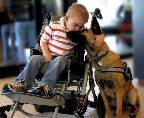 doge-love (1)