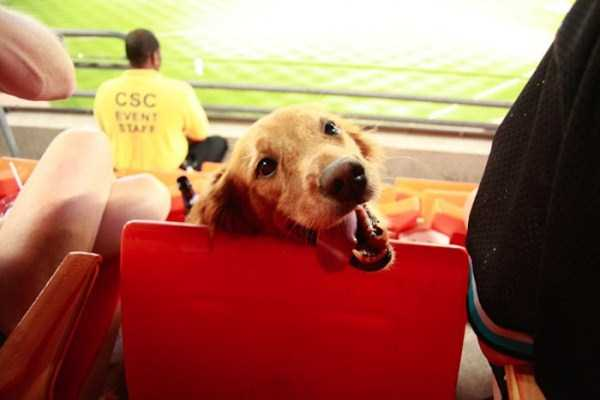 doge-love (16)