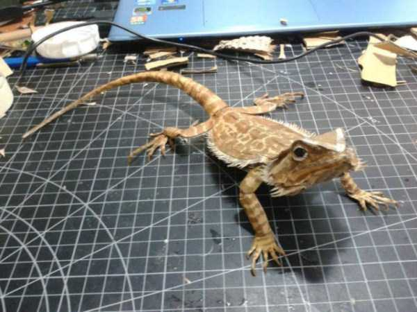 lifelike_bearded_dragon_made_out_of_cardboard (14)