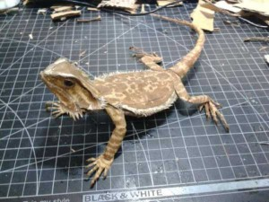 Bearded Dragon Made Entirely of Cardboard (24 photos) 16