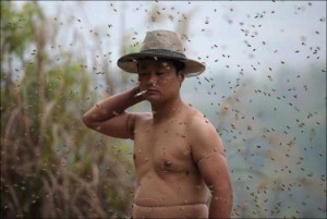 Chinese Beekeper Covers Himself With 460,000 Bees (12 photos) 1