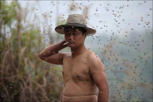 man-covered-with-bees (1)