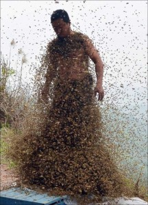 Chinese Beekeper Covers Himself With 460,000 Bees (12 photos) 10