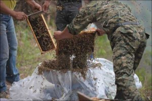 Chinese Beekeper Covers Himself With 460,000 Bees (12 photos) 2