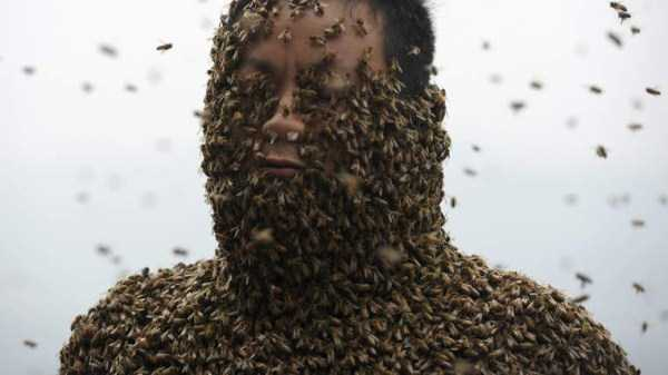 Chinese Beekeper Covers Himself With 460,000 Bees (12 photos) 8