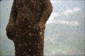 Chinese Beekeper Covers Himself With 460,000 Bees (12 photos) 9