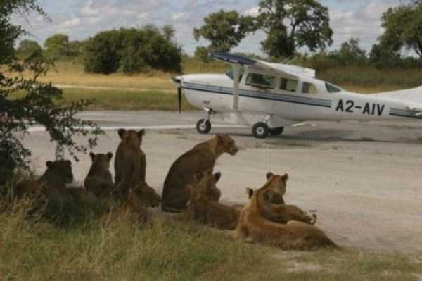 only_in_africa_07_1