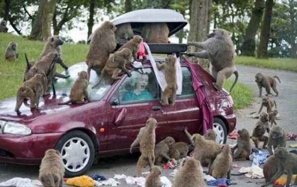 only_in_africa_17_1