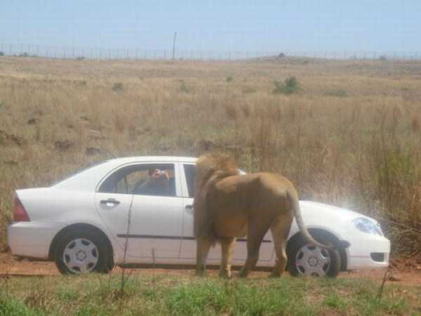 only_in_africa_21_1