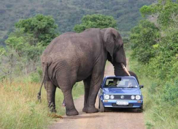 only_in_africa_40_1