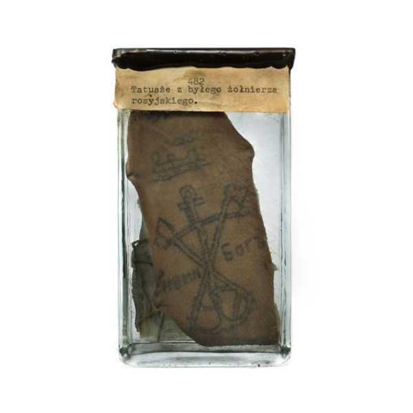 tattoos-preserved-in-Formaldehyde (8)