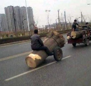 Totally Crazy Things You Will Only See in Asia (63 photos)