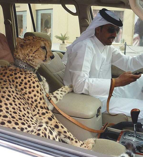 Only-in-Dubai (17)