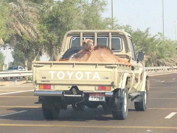 Totally Crazy Things Found in Dubai (35 photos) 30