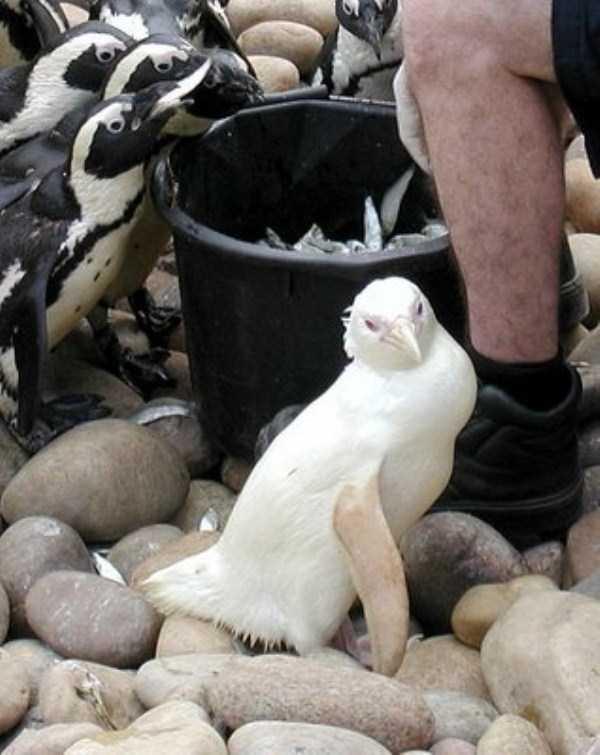 albino-animals (20)