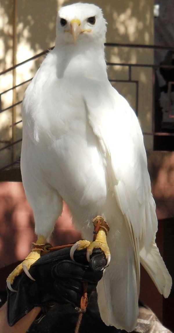 albino-animals (22)