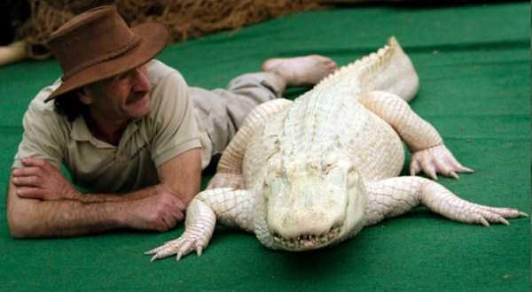 albino-animals (26)