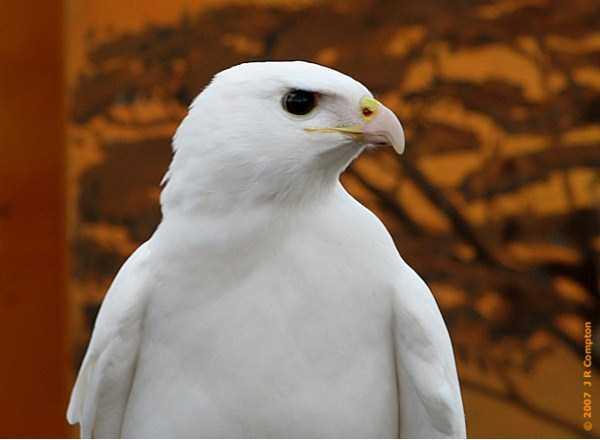 albino-animals (28)