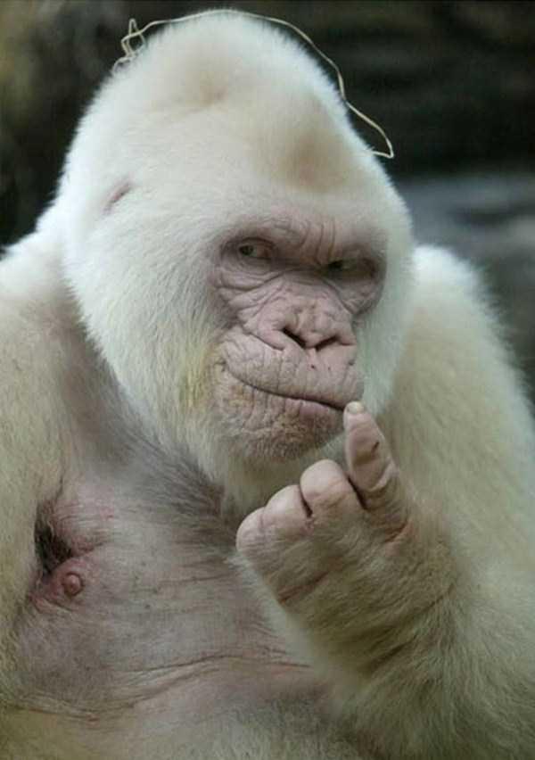 albino-animals (29)