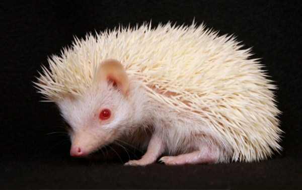 albino-animals (30)