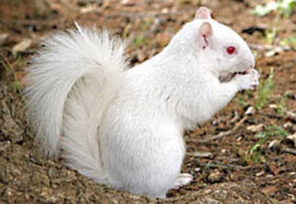 albino-animals (34)