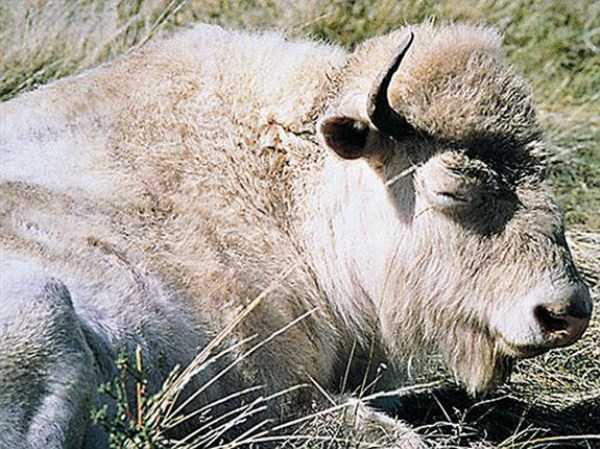 albino-animals (44)