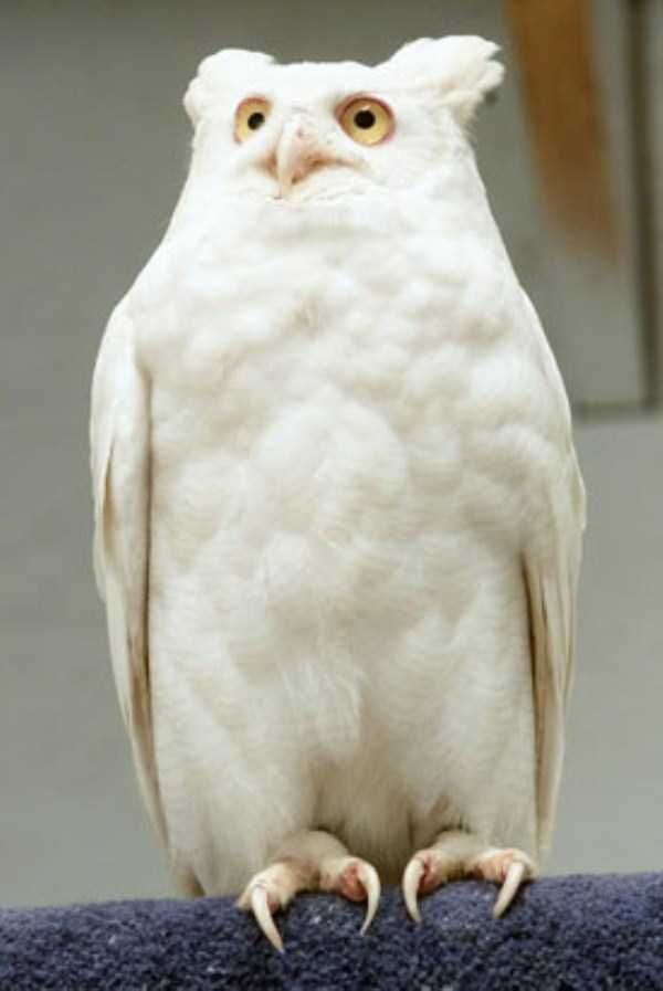 albino-animals (48)
